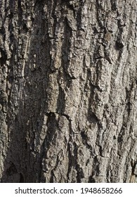 picture of tree bark. Natural wood surface texture.