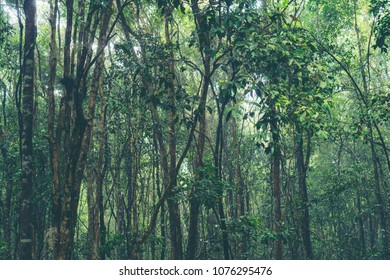 picture of tropical rain forest in Thailand, nature concept