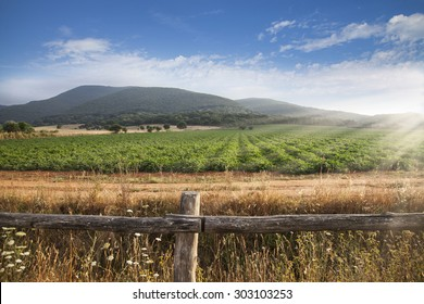 Picture of Tuscany countryside with the field of tomatoes and beautiful light atmosphere.