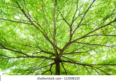 picture under the tree with spread branch and green leaves