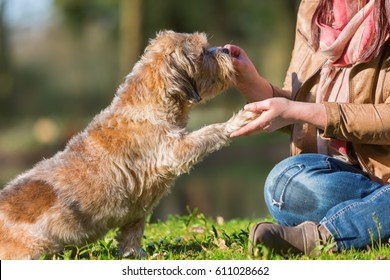 picture of a woman giving her dog a treat and getting the paw