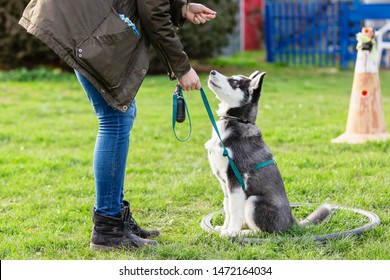 picture of a woman who trains with a young husky on a dog training field