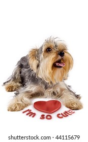 picture of a yorkshire terrier with a 3d heart saying he's so cute