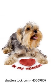 picture of a yorkshire terrier with a 3d heart saying: be my valentine