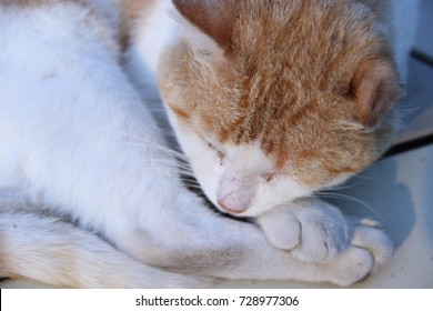 Pictured in the photo muzzle of a red cat.