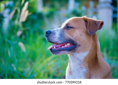 Pictures about natural dogs, flowers and food.