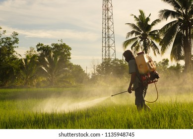 Pictures of people sprayed with fertilizers for vegetables with flow or distribution of water into the rice paddies.
