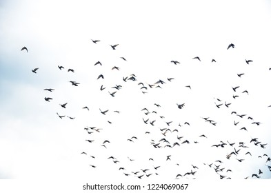 Pictures of pigeons flying in the sky at Batu Cave, Malaysia
