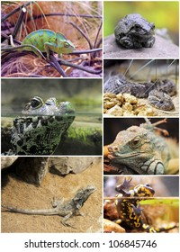 pictures of reptiles and amphibians in terrariums