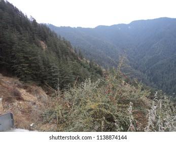 Pictures at Shimla, Himachal Pradesh, India on 6 Jan 2010