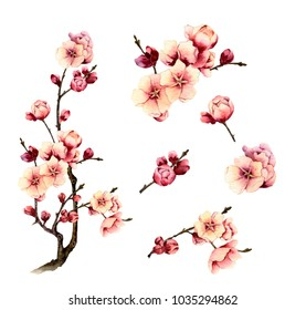 Picture-set of a blossomy plum-tree hand painted in watercolor isolated on the white background. The symbol of spring, new life, hope and nature's awakening