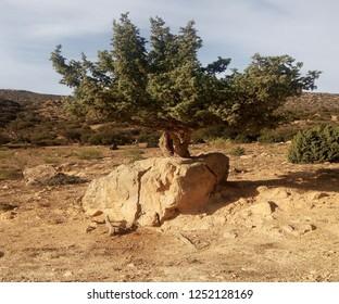 The picturesque Algerian nature