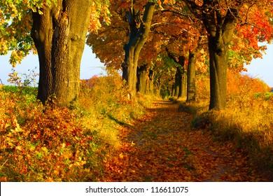 Picturesque autumn alley