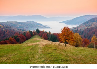 Picturesque autumn sunrise scenery in the mountains with meadow and colorful trees on foreground and fog underfoot. National Natural Park Synevyr, Carpathian Mountains, Ukraine.