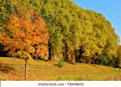 Picturesque autumn trees