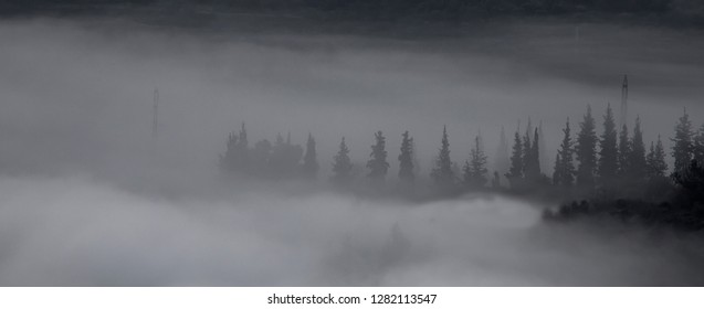 A picturesque black and white landscape photograph of a row of cypress trees and electricity poles obscured by a cloud who nestled in the valley they are at.