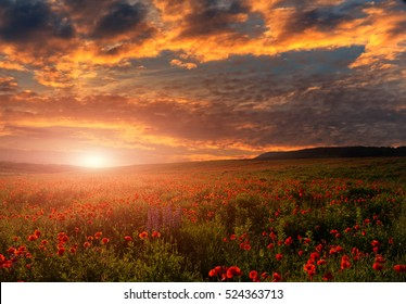 picturesque clouds in sky over the poppy field. fantastic sunset. beauty on the world. color in nature. artistic creative images