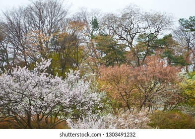 Picturesque crowns of trees in the spring forest, colorful awakening of nature. Changdeokgung Palace park, Seoul, South Korea.