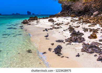 Picturesque dark stone with sticky petrified shells on the beach with white sand and transparent turquoise water of the Adaman Sea, tropical island and blue sky. Tup Island, AO Nang, Krabi, Thailand.