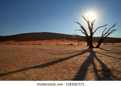Picturesque Deadvlei desert landscape, view on dead tree lit by starry sun from behind, against huge red dunes of famous  Deadvlei place in Namib Naukluft National Park, Namibia.