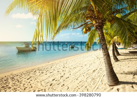 Picturesque Fishing Boats Parked In The Clear Ocean On A Background Of Palm Trees And Beautiful