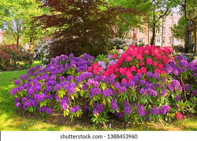 picturesque flowerbed with bright flowers on the street of Amsterdam