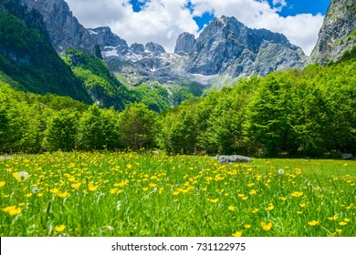 Picturesque flowers in the meadow in the high mountains.