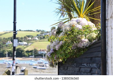 Picturesque flowers on a wall in salcombe bay