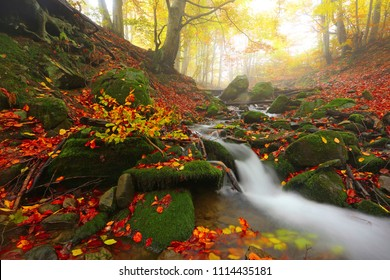 picturesque gold autumn image, fast stream flowing between green stones on background autumn forest in sunlight morning sunrise, amazing nature landscape, Carpathians, Europe mountains