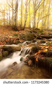 picturesque gold autumn image, fast stream flowing between on background autumn forest in sunlight morning sunrise, amazing nature dawn landscape, Carpathians, Europe vertical sunrise mountains sacene