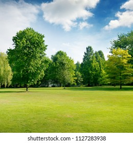 Picturesque green glade in city park. Grass and trees. Copy space.