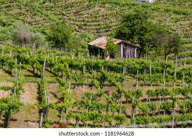 Picturesque hills with vineyards of the Prosecco sparkling wine region in Valdobbiadene - Italy.