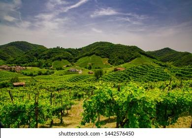 Picturesque hills with vineyards of the Prosecco sparkling wine, region in Valdobbiadene, Veneto, Italy.