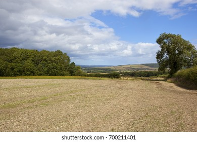 picturesque hills and woodland with wildflowers and harvested field under a blue sky with storm clouds in the yorkshire wolds in summer
