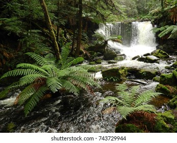 picturesque  horseshoe falls and fern trees in the lush  rain forest of mt. field national park, near hobart,  tasmania, australia