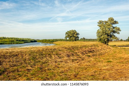 Picturesque image of the Dutch National Park De Biesbosch in the evening of a sunny summer day. The blue sky is reflected in the water surface and the grass on the embankment is dry and yellowed.