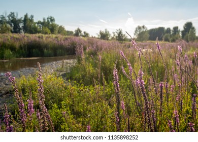 Picturesque image of a nature reserve with colorful wild flowers while the sun is low in the sky.