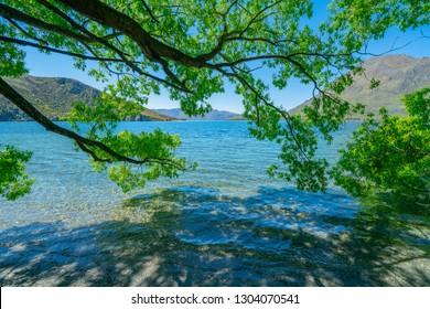 Picturesque Lake Wanaka scene under spreading willow tree at Glendhu Bay