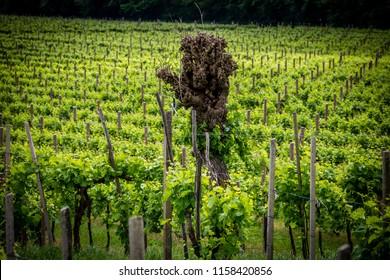 The picturesque landscape full of vineyards around the town of Valdobbiadene vine region, Italy