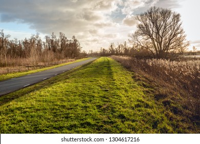 Picturesque landscape with long and curved country road and a tall bare tree in backlit. The photo was taken in the Dutch National Park Biesbosch, North Brabant.