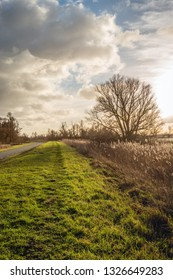 Picturesque landscape with a long curved country road and a tall bare tree in backlit. The photo was taken in the Dutch National Park Biesbosch, North Brabant.