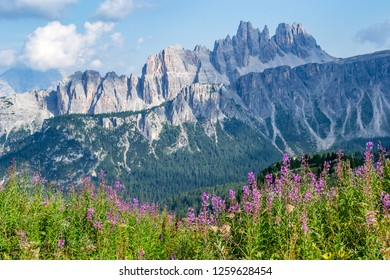 Picturesque landscape in Passo di Giau, South Tyrol, Dolomites, Italy, with pink fireweed wildflowers in foreground and a spiky, rocky, mountain ridge in the back, during a hike on a hot Summer day