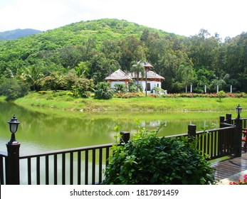 Picturesque landscape with trees, palmtrees, wooden way and lake