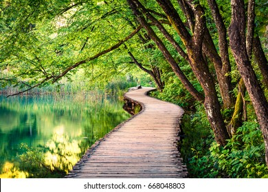 Picturesque morning in Plitvice National Park. Colorful spring scene of green forest with pure water lake. Great countryside view of Croatia, Europe. Beauty of nature concept background.