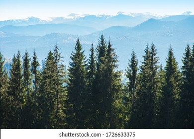 Picturesque mountain panoramic landscape with fir trees and mountain tops on a clear day.