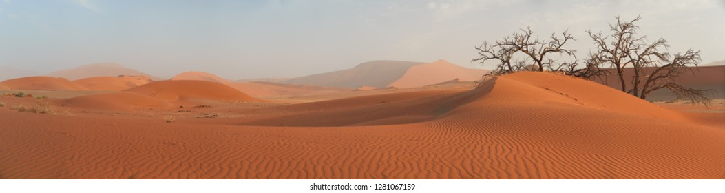 Picturesque Namib desert landscape, panoramic view on huge red dunes  against blue sky near famous Deadvlei. Typical desert environment, wildlife photography in Namib Naukluft National Park, Namibia.