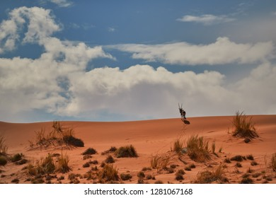 Picturesque Namib desert landscape, view on Gemsbok, Oryx gazella on the ridge of huge red dune against blue sky. Typical desert environment,  Namib Naukluft National Park, Namibia.