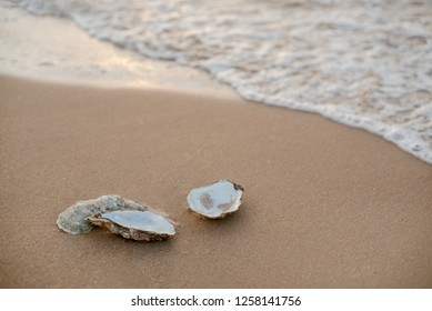 Picturesque oyster shells in the soft sunset light on the surf line with sand on the sea beach, as a concept of summer holidays, sea resort, spa.