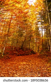 A picturesque path in the autumn forest. beautiful nature, tranquility, relaxation.