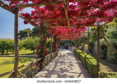 picturesque path, covered with red bougainvillea, Capri, Gulf of Naples, Campania, Italy